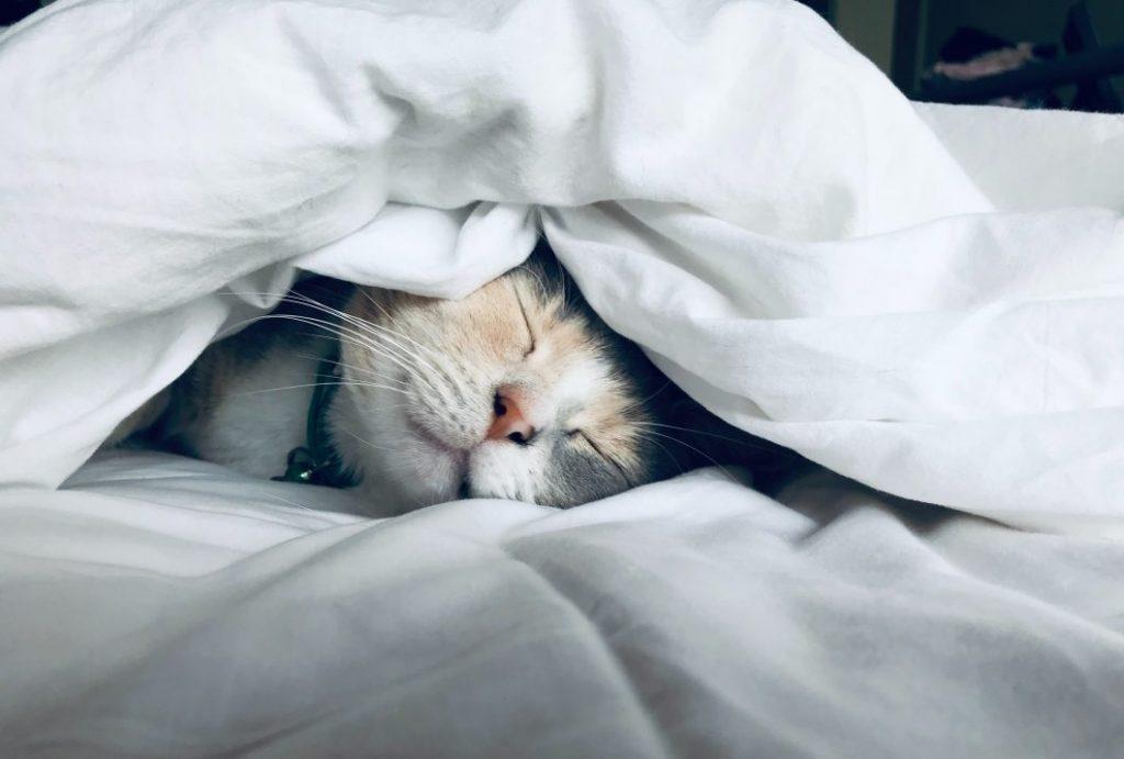 脳機能をさらに高めるには睡眠が大事